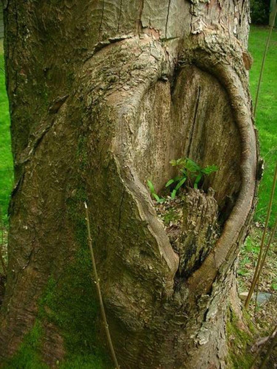 random heart shape in tree