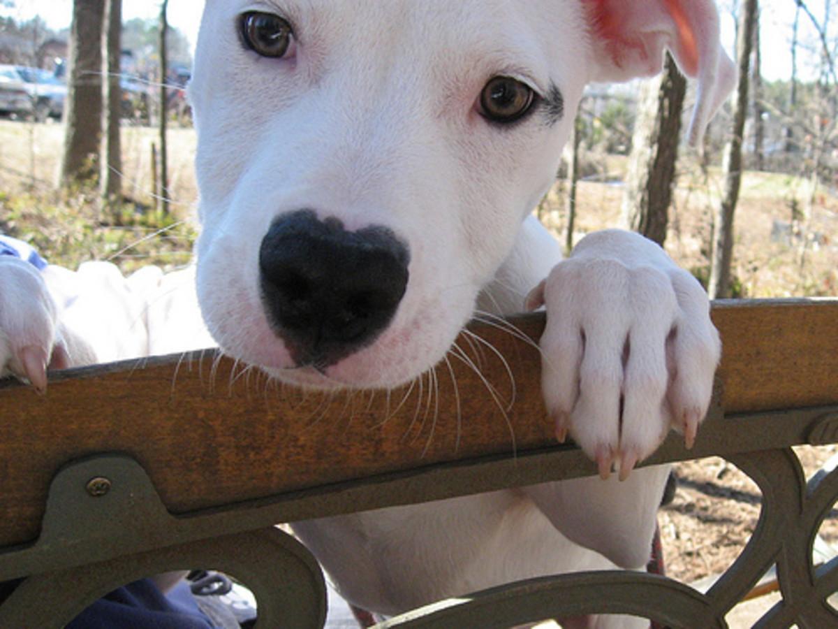 Heart puppy nose
