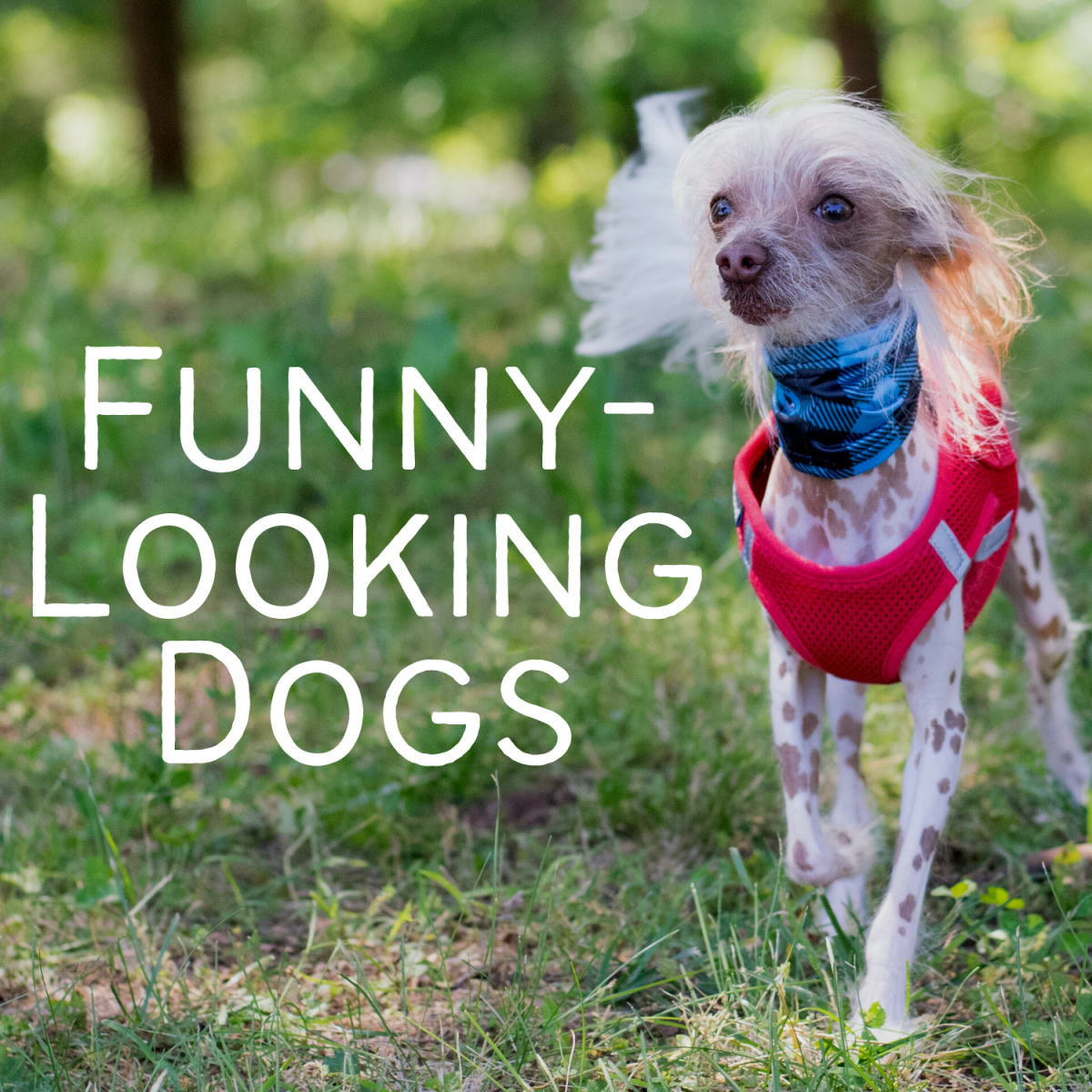 Seven of the weirdest, funniest-looking dogs in the world.
