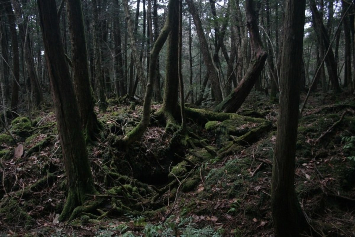 The suicide forest, Aokigahara.