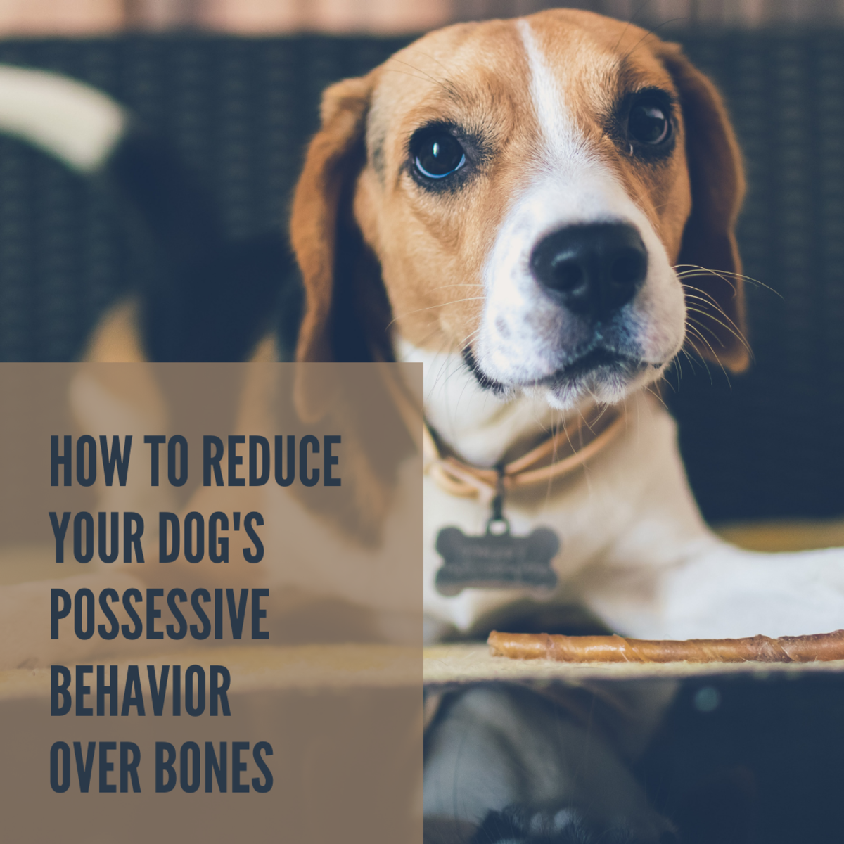 Is your dog overly protective of their bones?