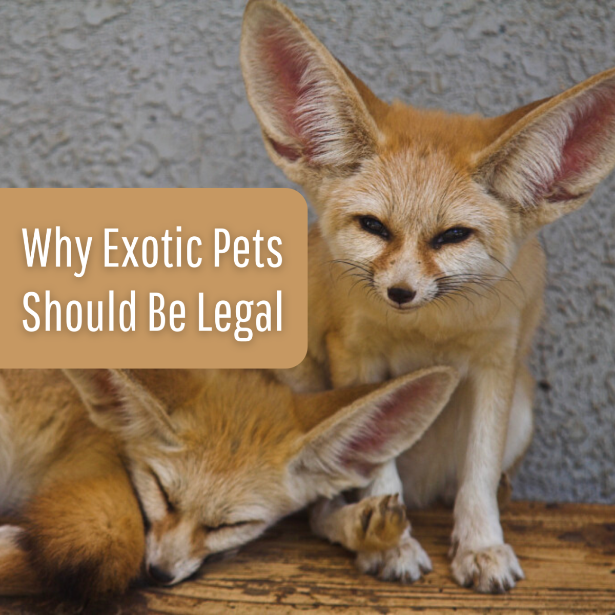 Discover some arguments in favor of legalizing exotic pets.