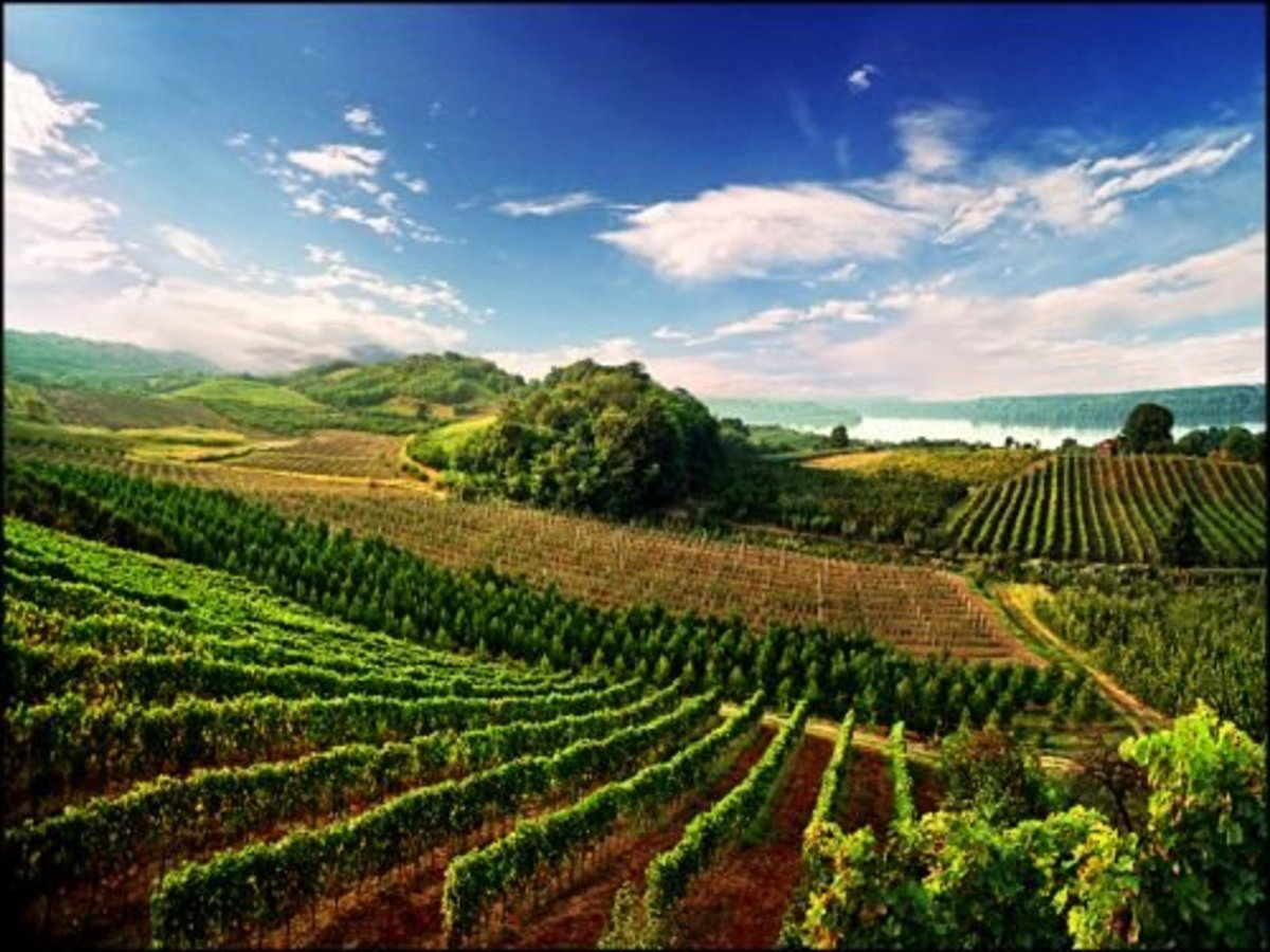Vineyards Of Fruska Gora, amazing landscapes.