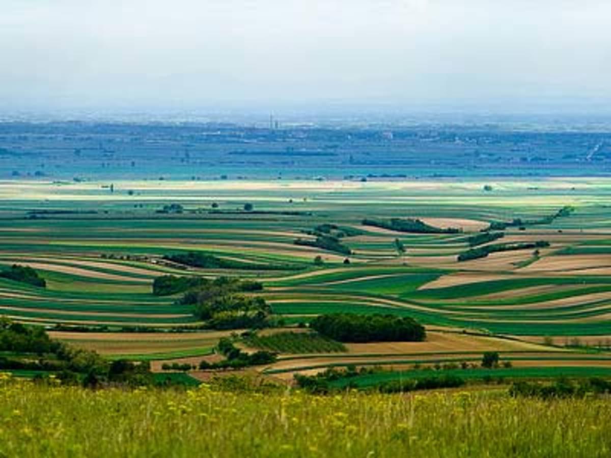 Landscape of Fruska Gora