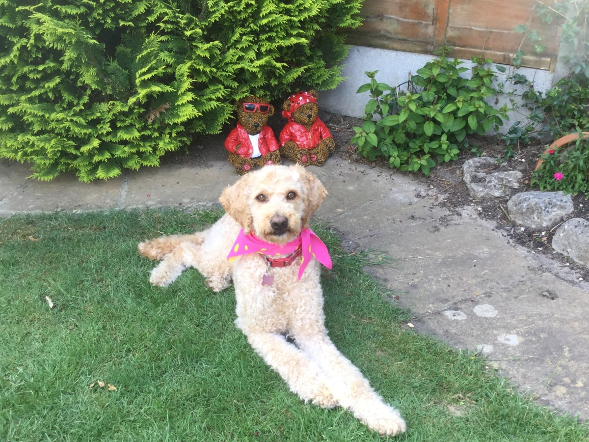 Florrie enjoying the garden
