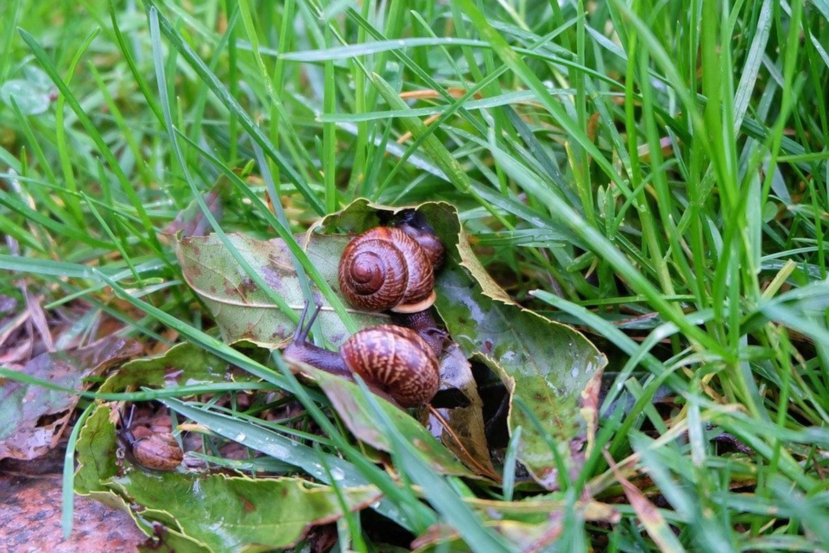 Snails on the prowl