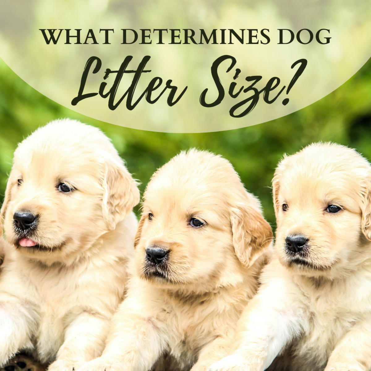 How many puppies are in a litter?