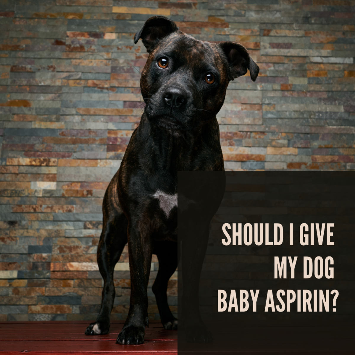 It's important to carefully consider the safety of medications we give our dogs.