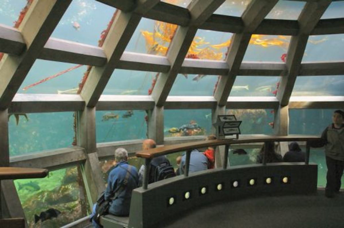 Seattle Aquarium - top place to visit in Seattle