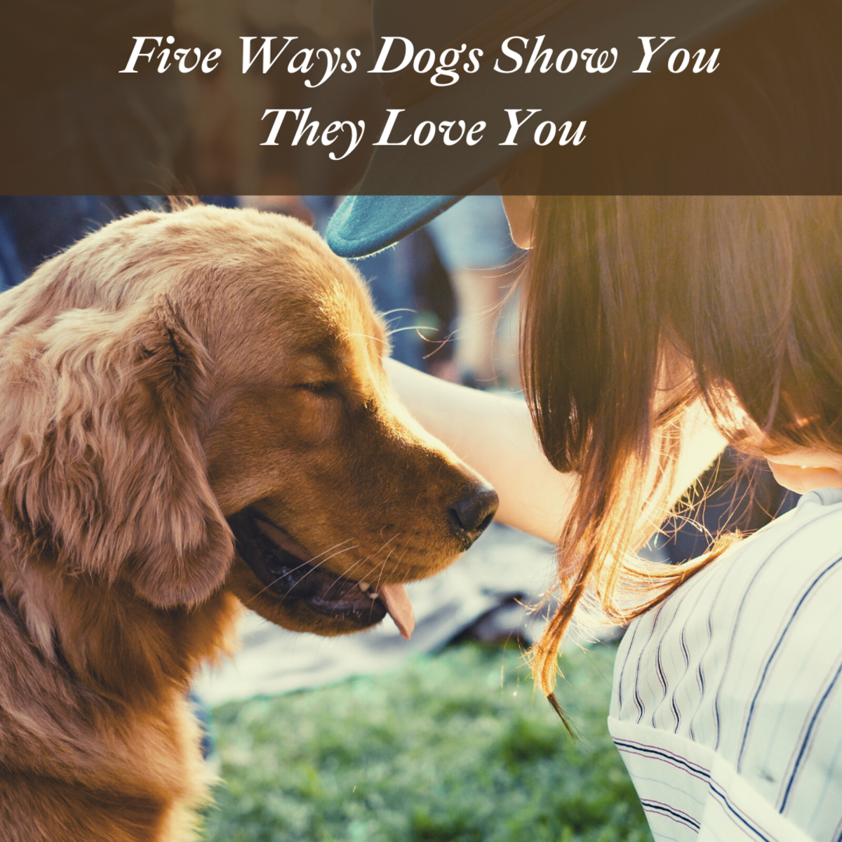 5 Ways Dogs Show Humans Love