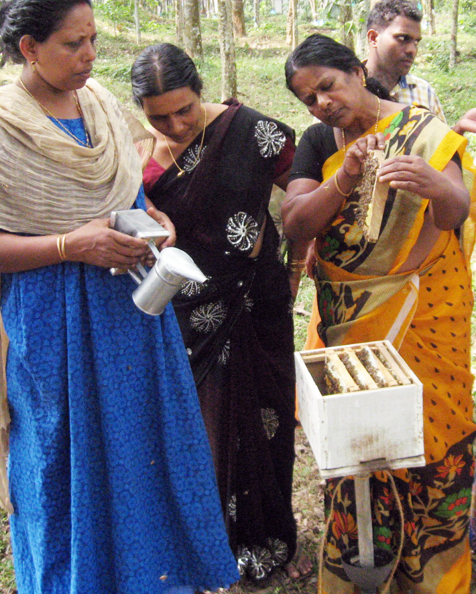 Women are busy beekeeping in rubber plantation