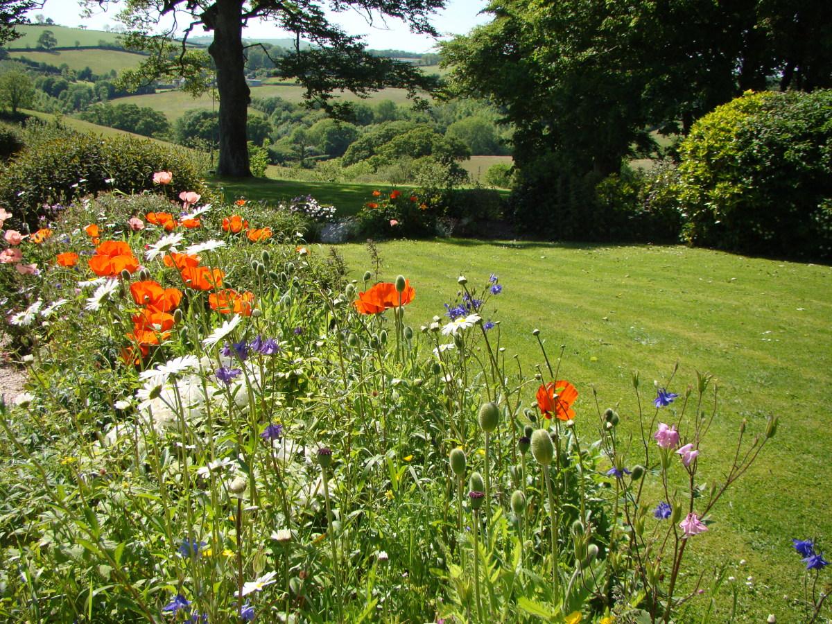 turf in a garden