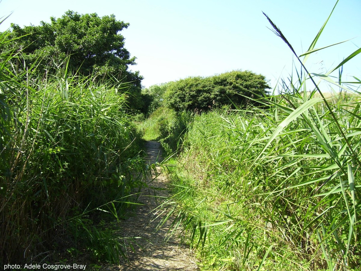 The boardwalk is thickly overgrown in places, making it a perfect haven for wildlife.