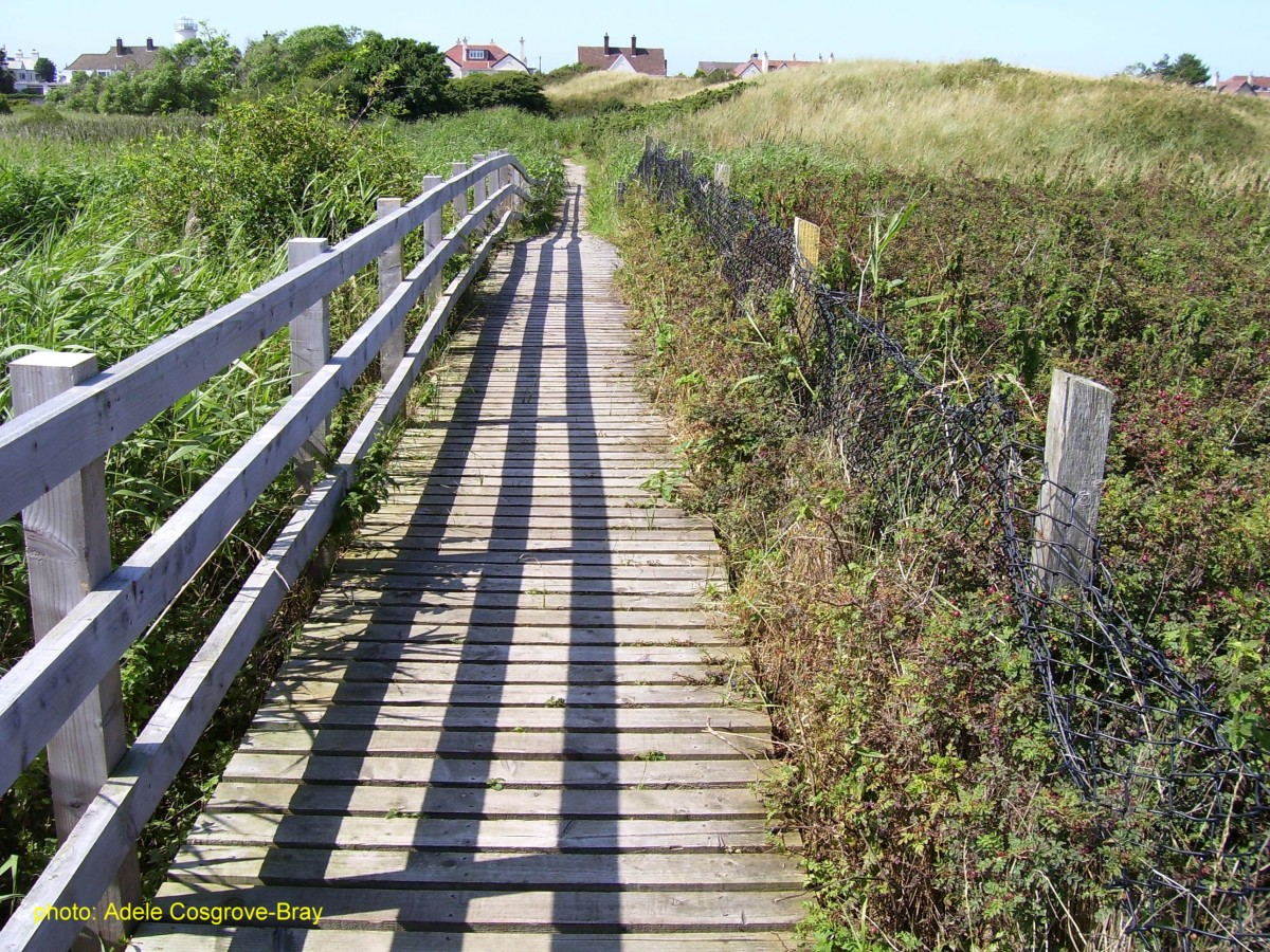 The boardwalk passes directly over Red Rocks Marsh.
