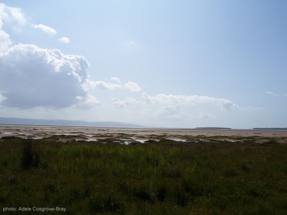 Marsh grass lining West Kirby beach, with Little Eye and one corner of Middle Eye on the horizon, with the hazey hills of Flintshire on the left.