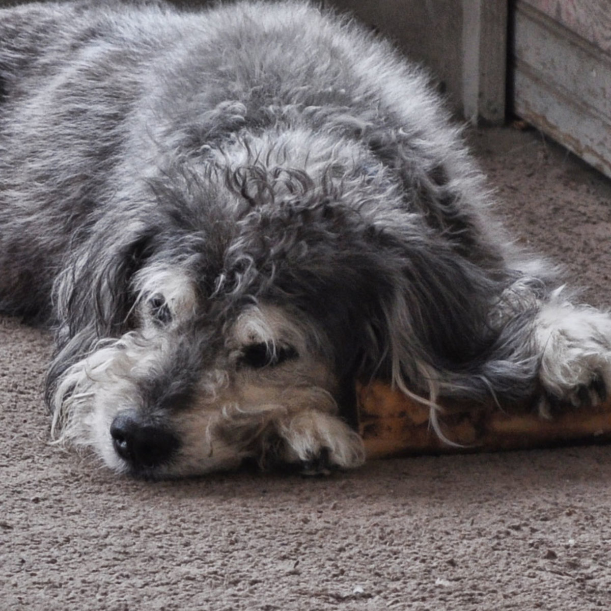 ...she never forgot to keep her bone nearby.