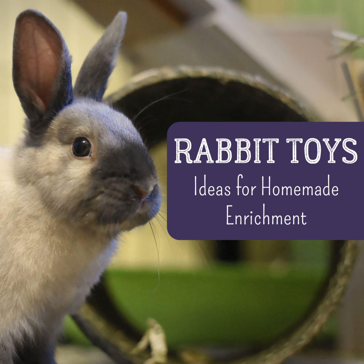 Get lots of ideas for fun, safe toys that you can make for your rabbit, like tunnels!