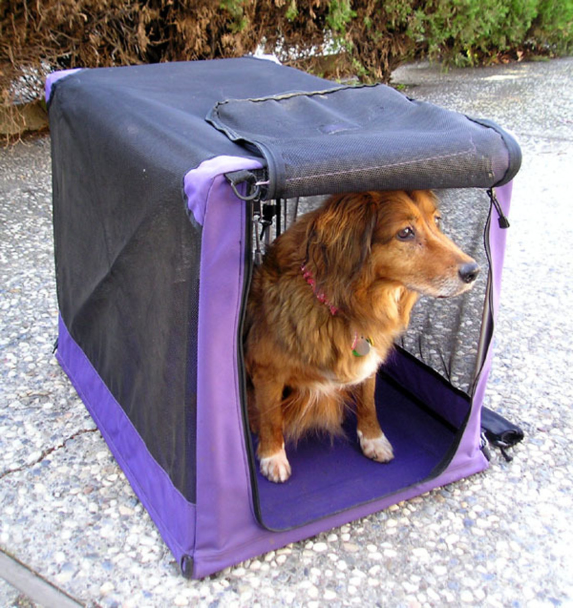 Fabric crates are best suited for calm dogs. These are easy to pack and transport and are convenient for those who enjoy traveling, camping, or other outdoor activities