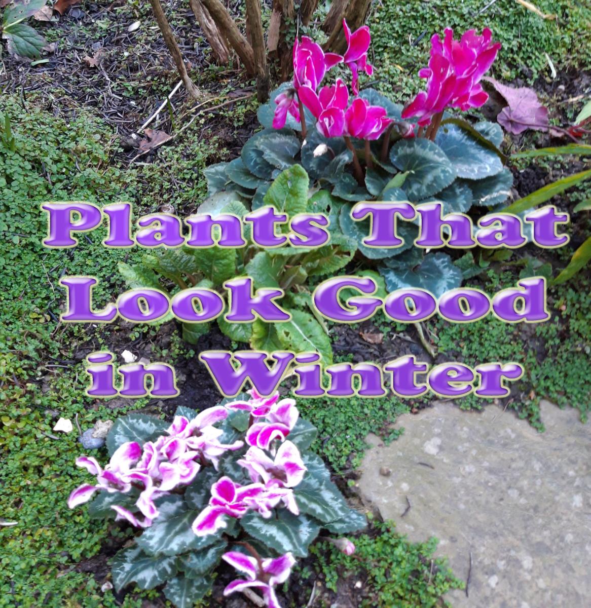 6 Plants That Look Good in Winter