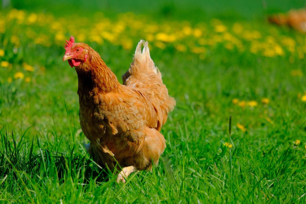 When your chickens produce eggs, it's a moment of pride for any backyard farmer! Explore this overview of farm-fresh eggs.