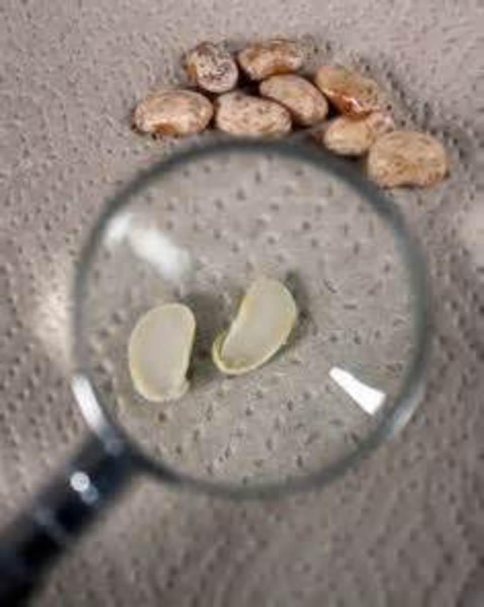 plant-seeds-lesson-plan