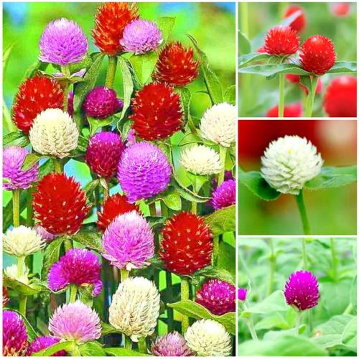 This looks like plastic flower. This is available in multi colors and the flower lasts for 2 months.