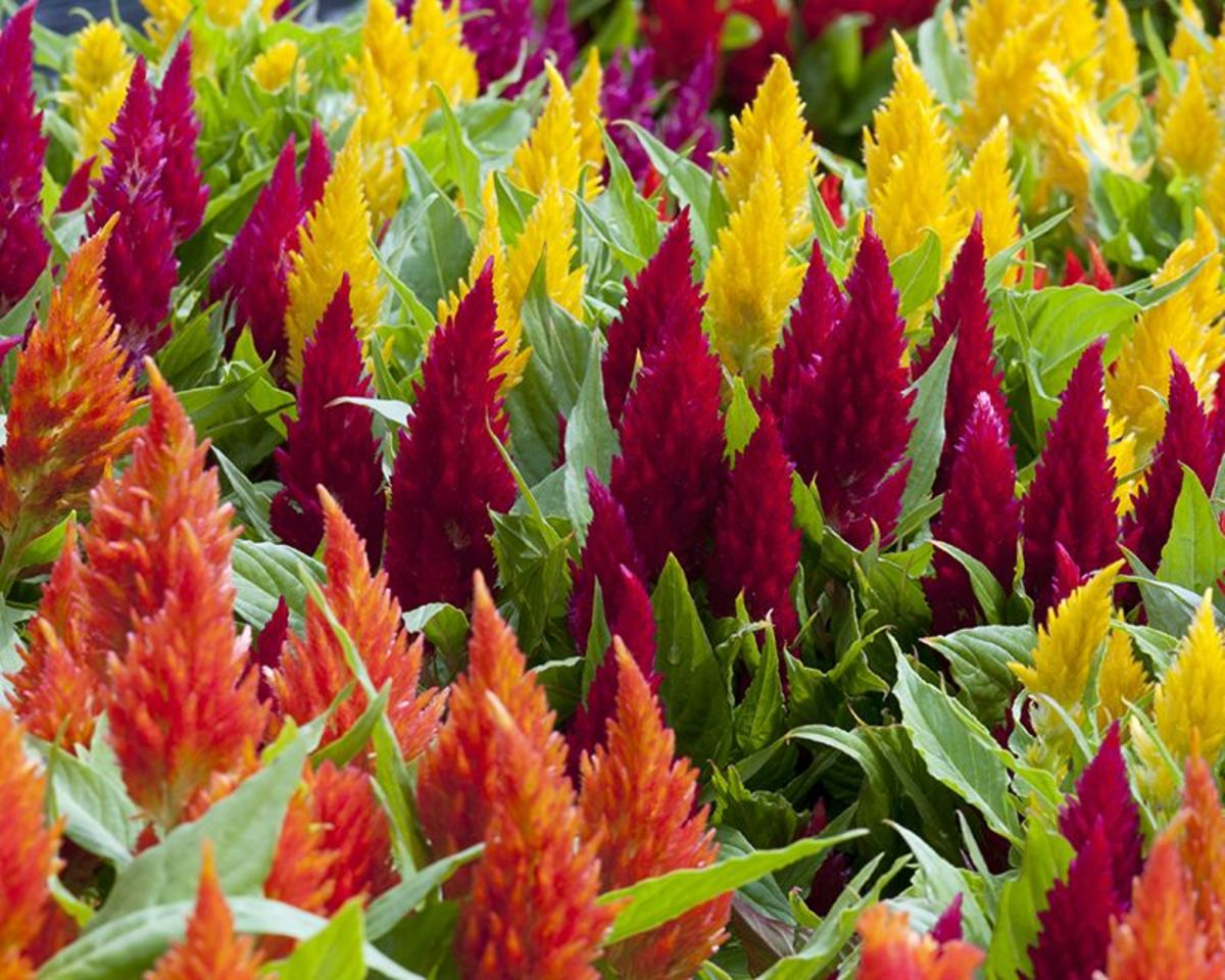 These Plants give a nice color to the the whole garden.