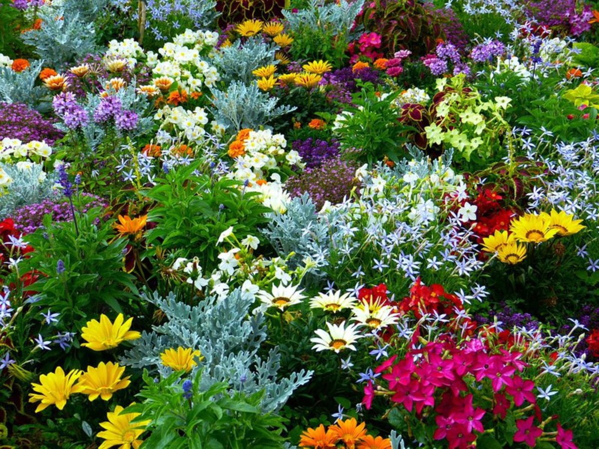 Plants to Grow in Summer(March-April) so as to Get Flowers Till Winter (October)