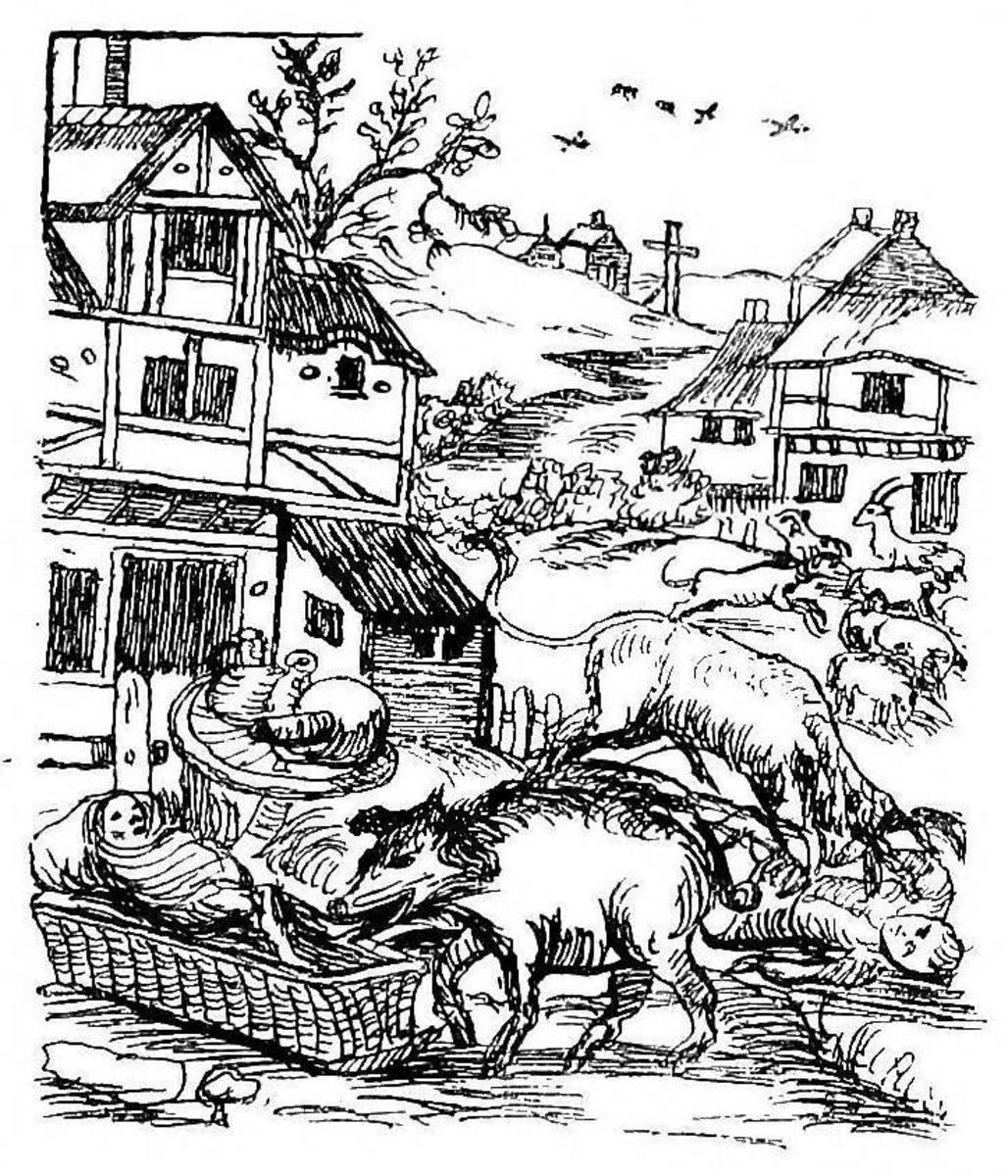 Hogs run amok in a village.