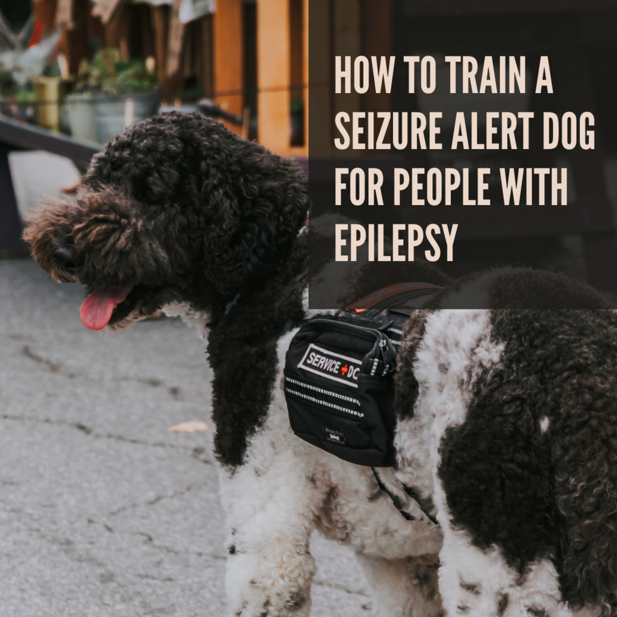 Dogs can be very helpful in warning people of an oncoming epileptic seizure.