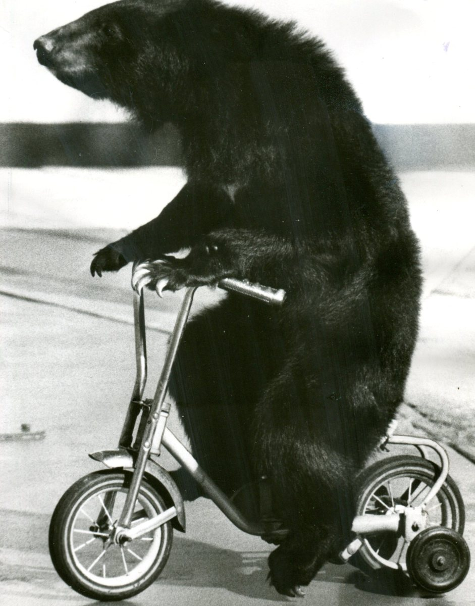 Fijiko the Bear (1974)