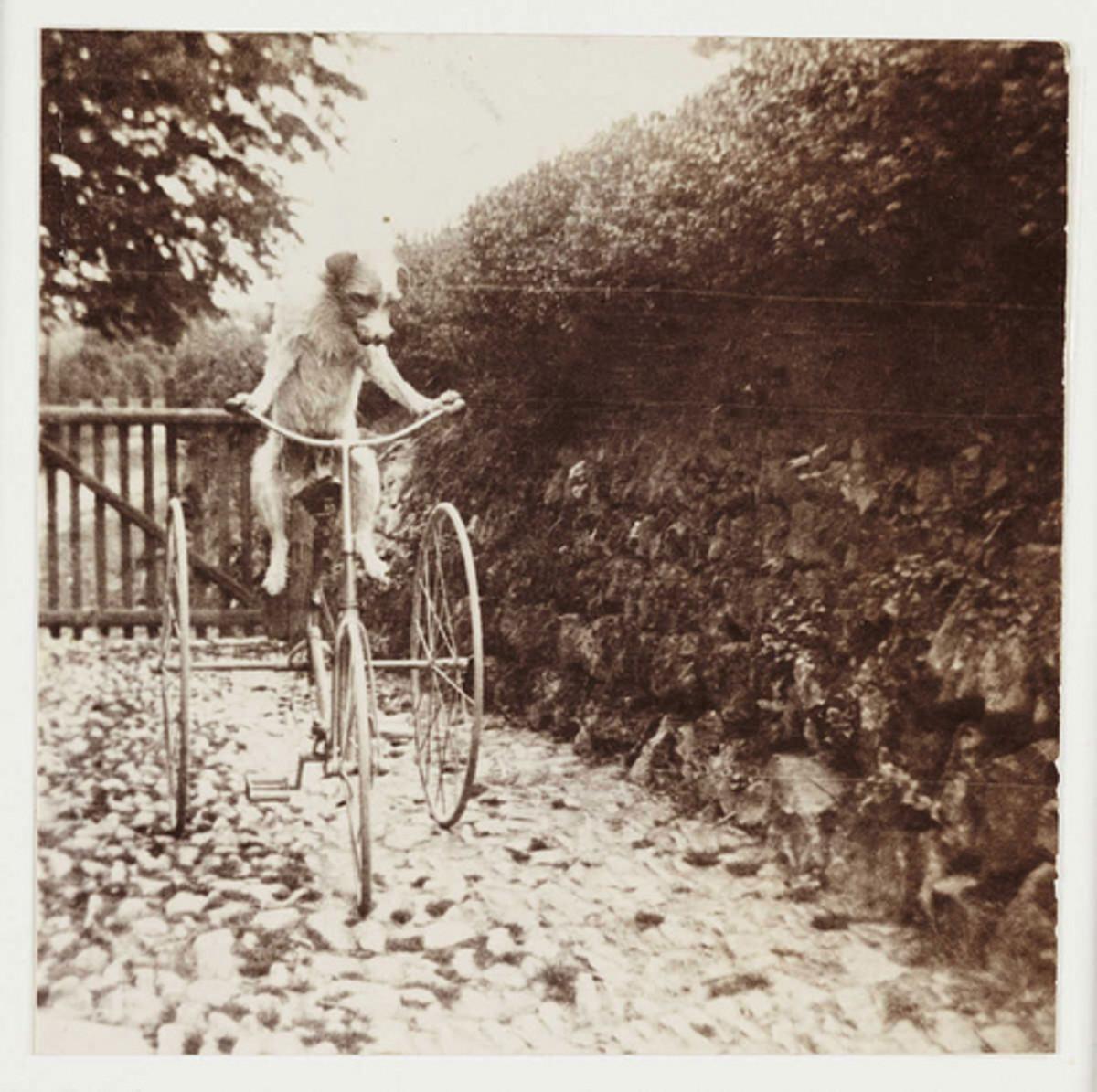 animals-on-bicycles