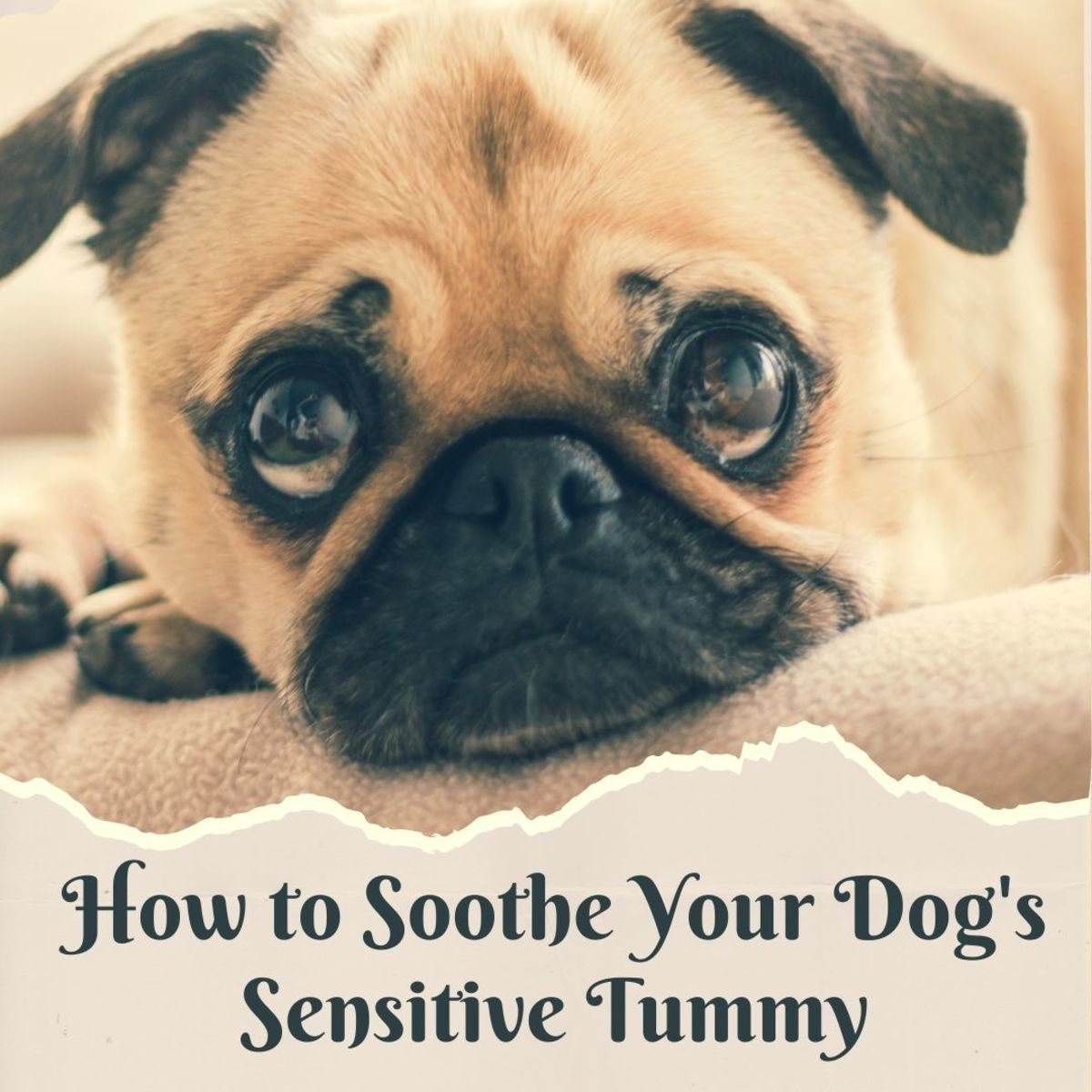 Dogs with sensitive stomachs