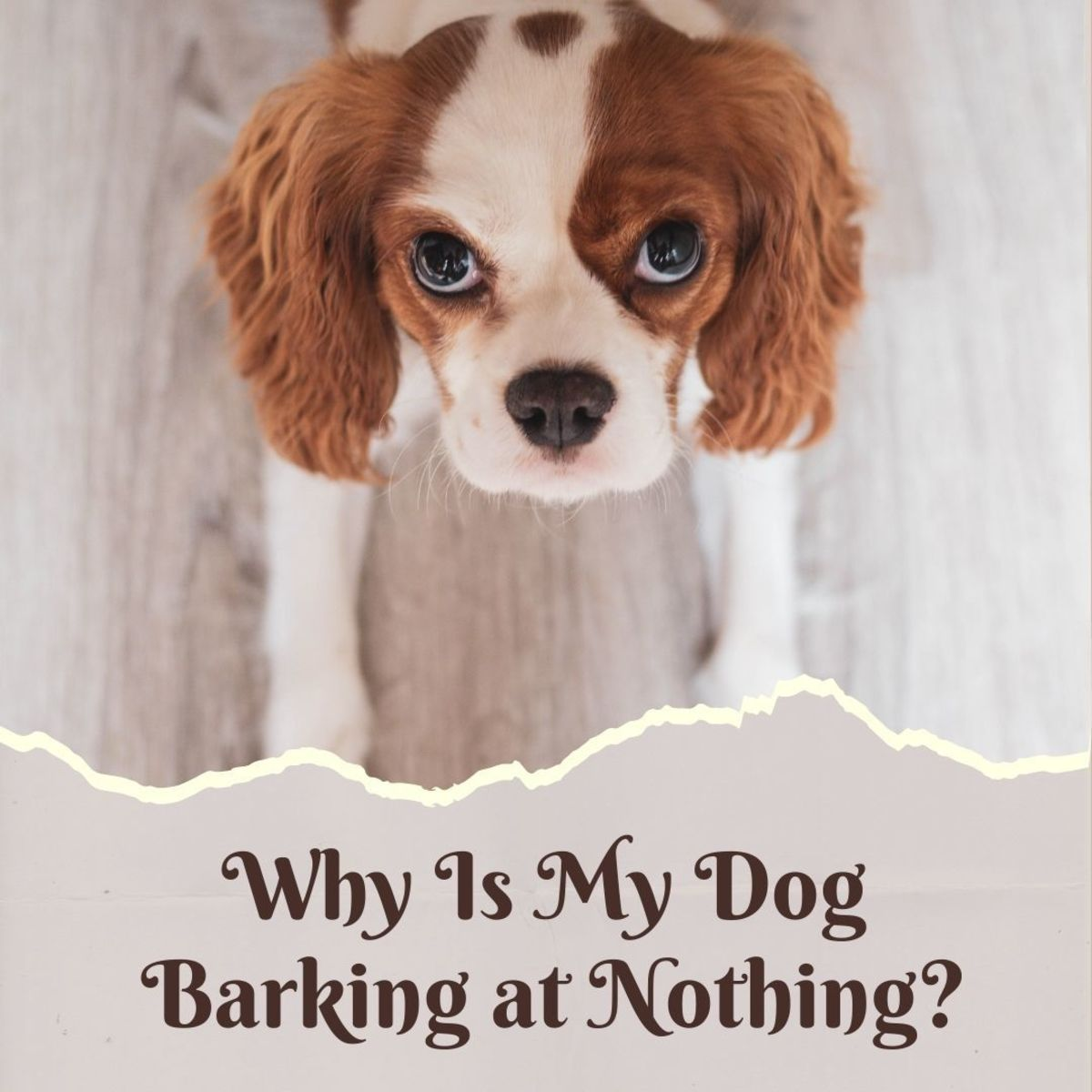 My dog is barking at nothing—why?