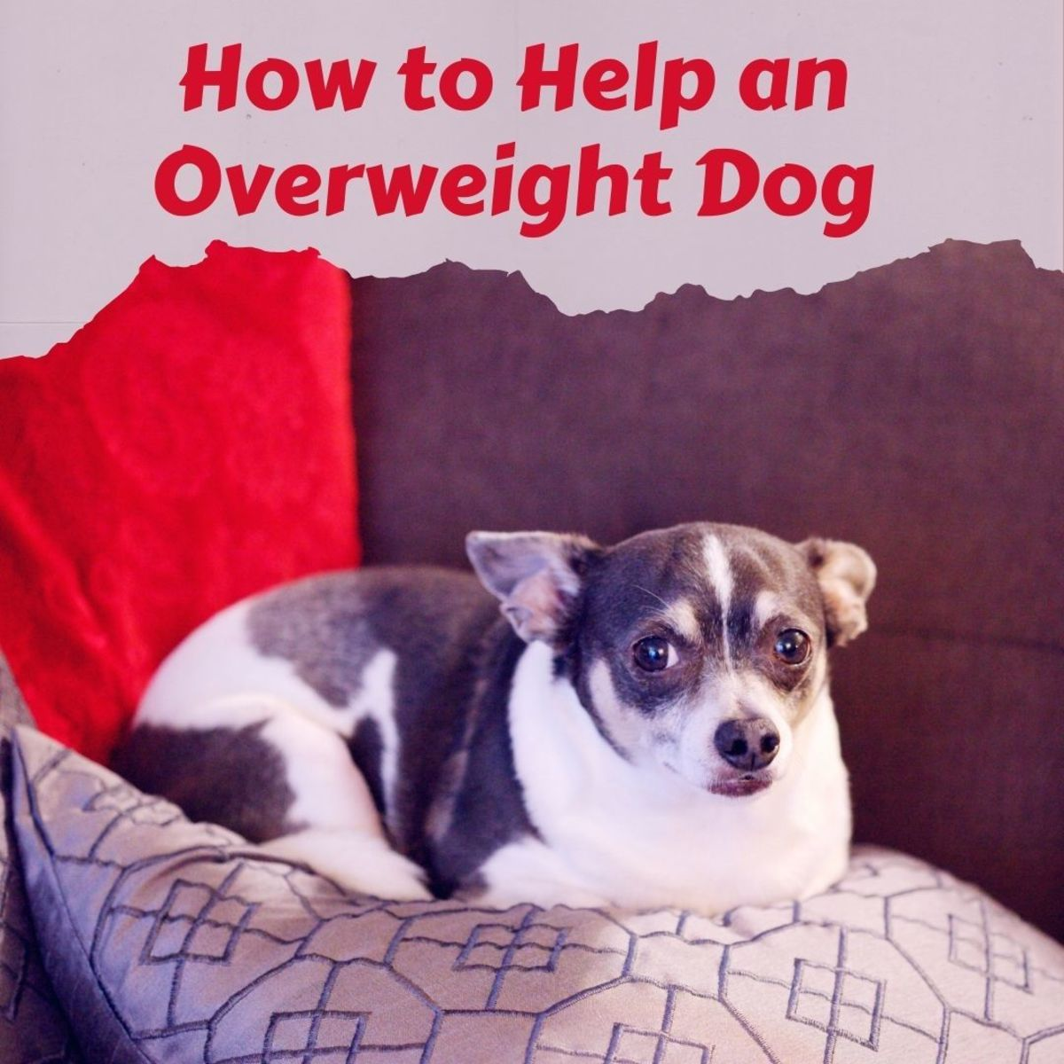 How to help a fat dog get healthy
