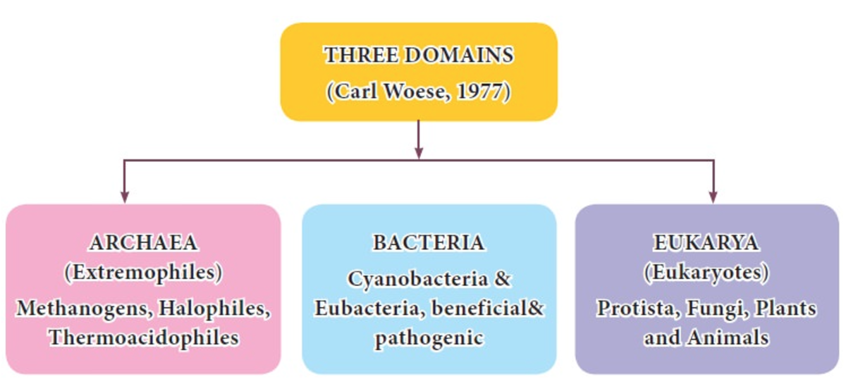 A domain is the largest of all groups in the classification of life. The domain groups include the Archaea domain, the Bacteria domain, and the Eukarya domain.