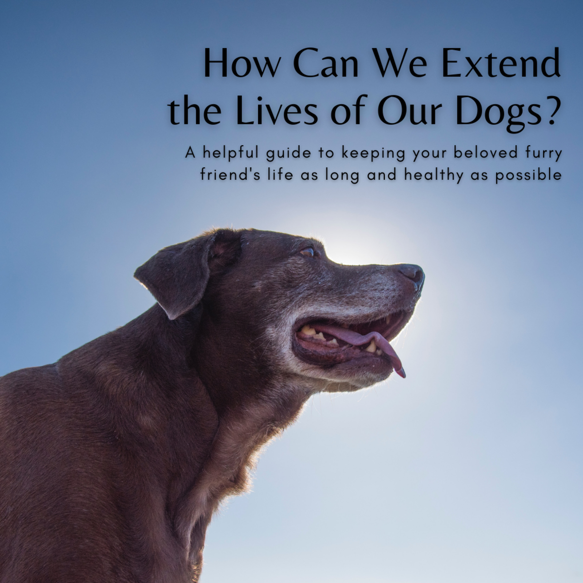 This article will break down how you can help extend the lives of your beloved furry companions.