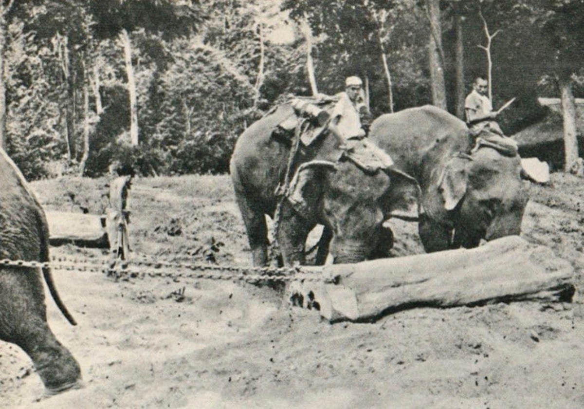 lieutenant-colonel-james-howard-williams-and-his-elephant-corps-in-burma-ww-ii