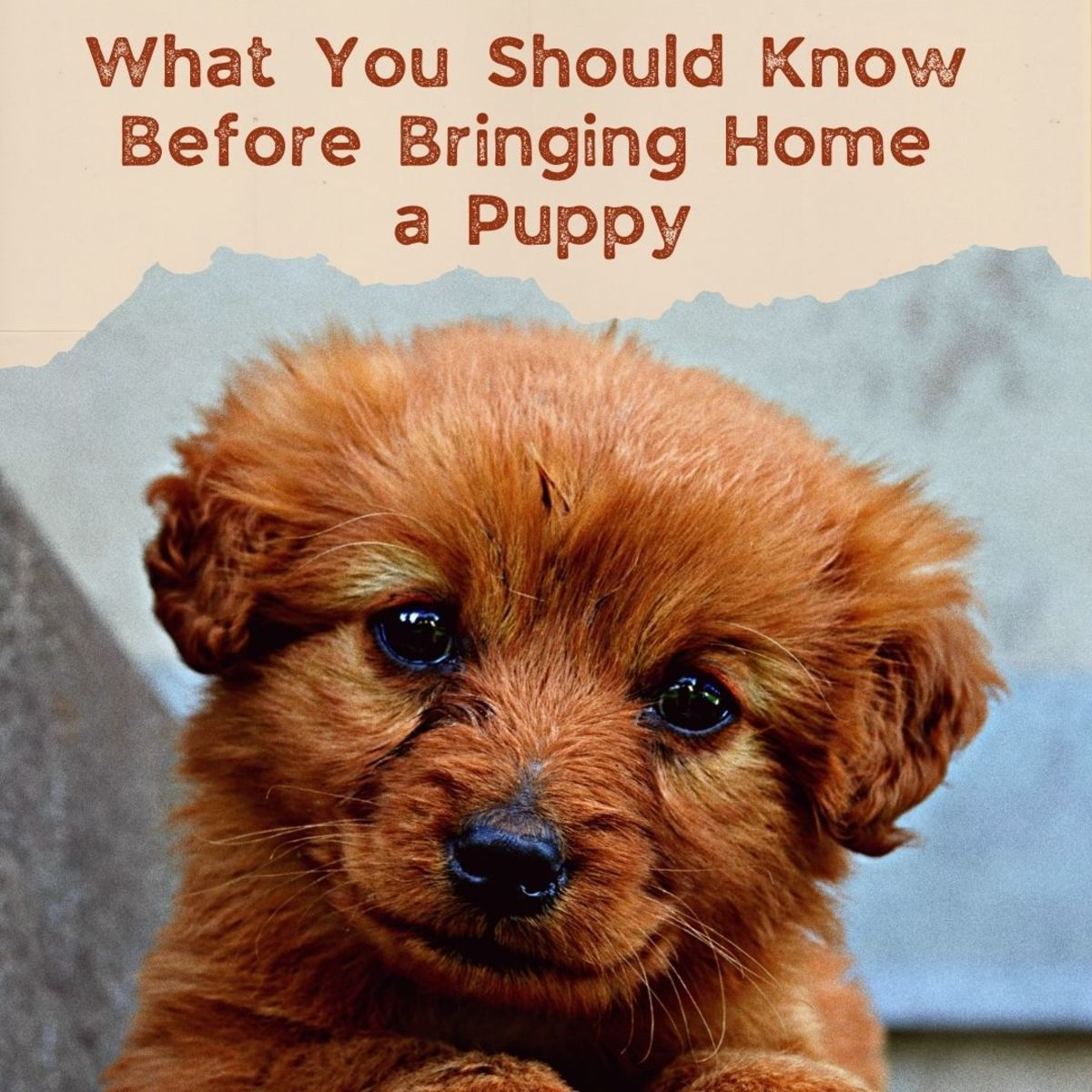 Everything you need to know before you get a new puppy