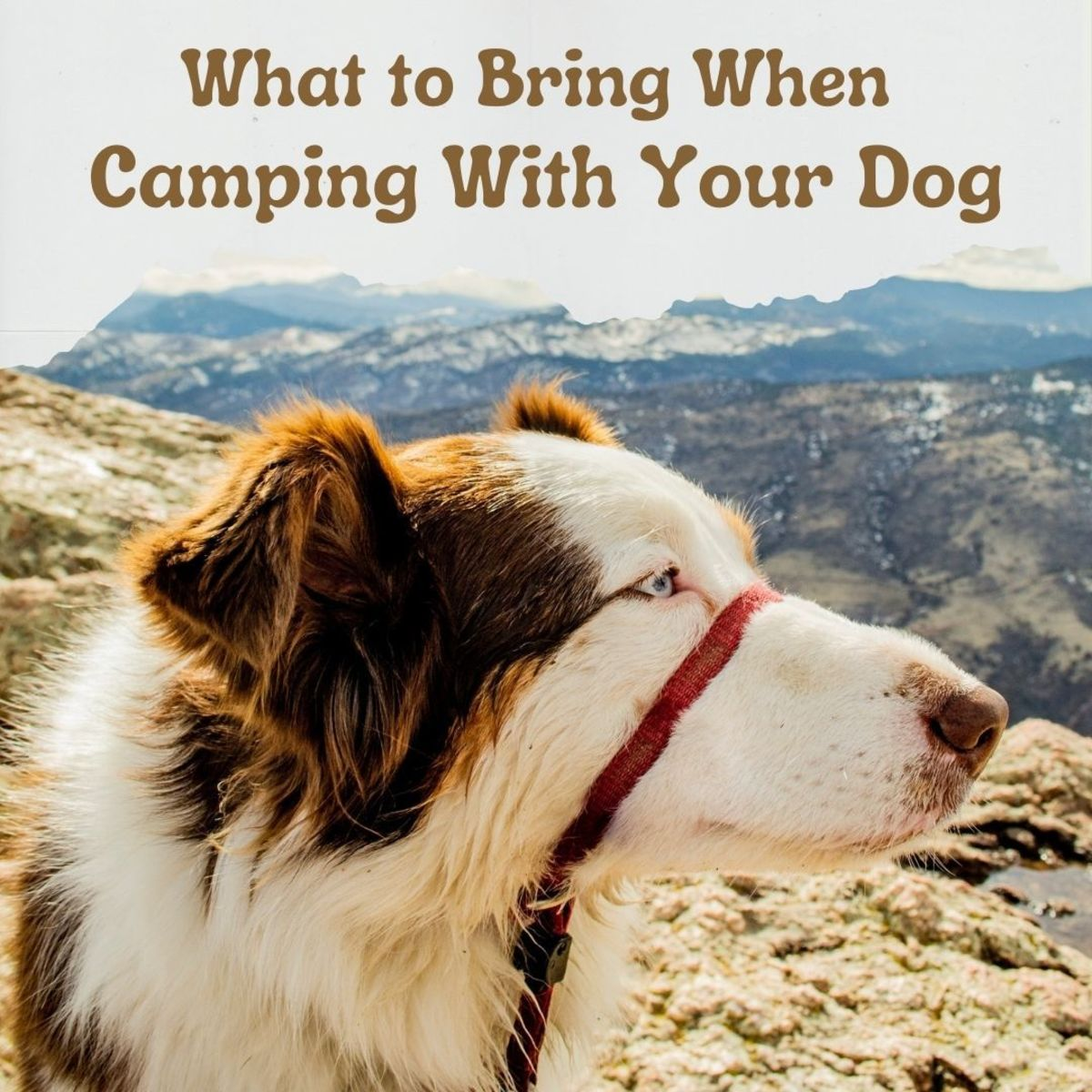 How to plan for a camping trip with your dog