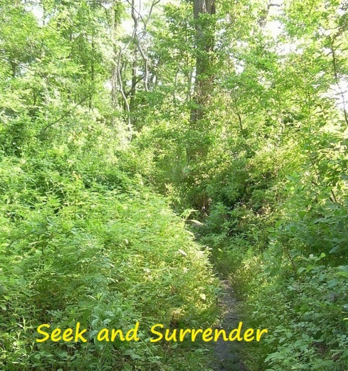 Seek and Surrender