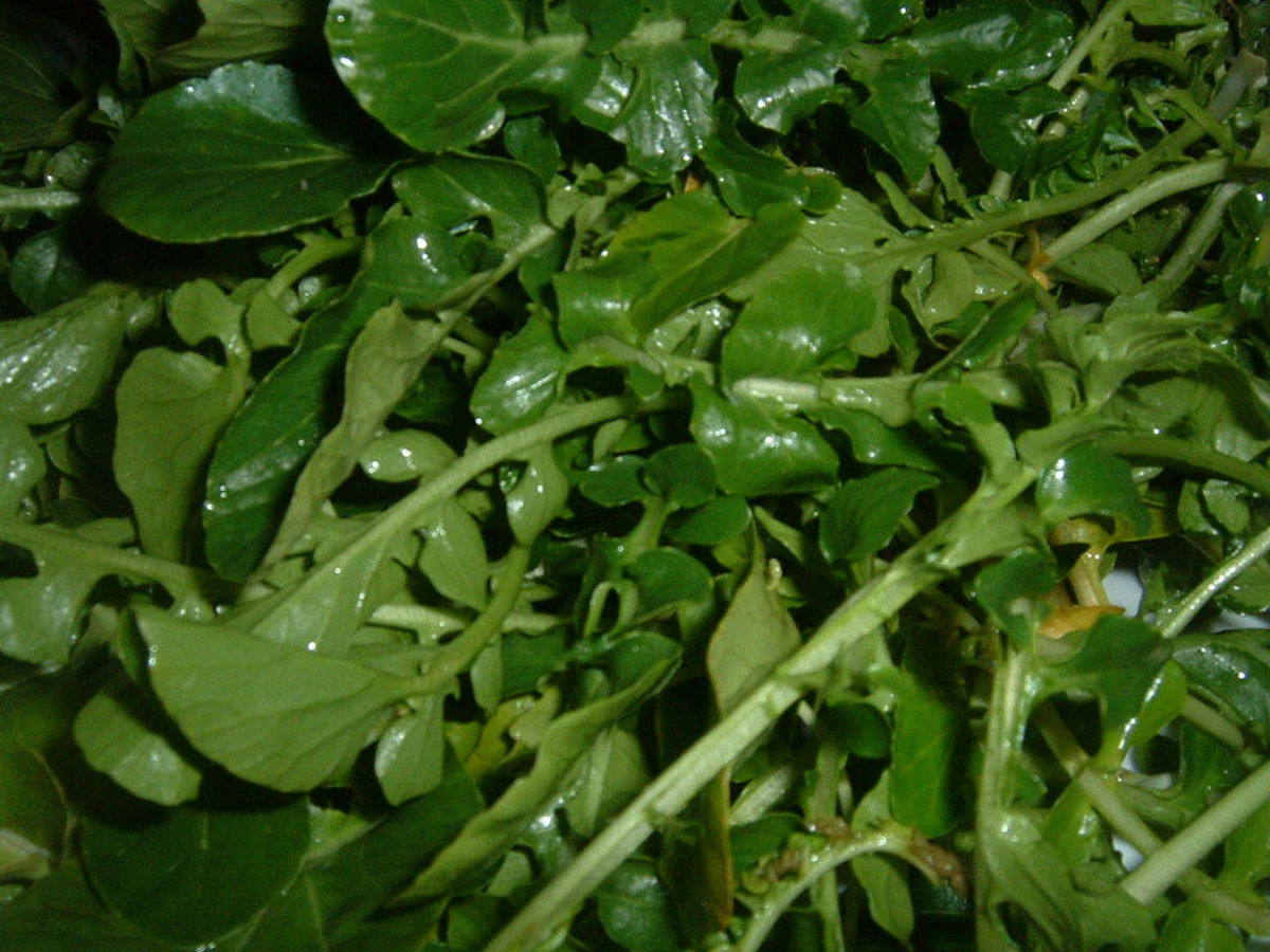 Watercress is a water-loving plant and encourages the body to urinate. The plant is tasty in salads, sandwiches, and soups.