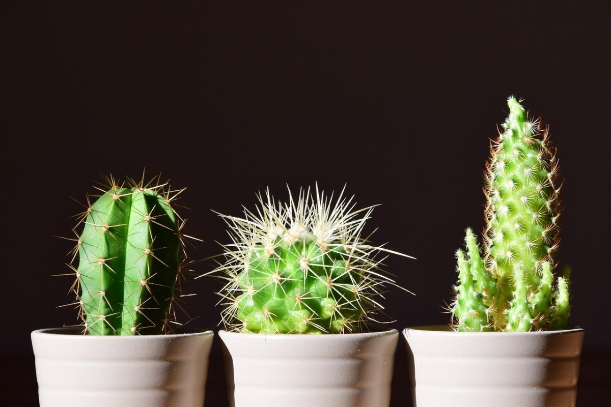 the-easiest-houseplants-to-care-for