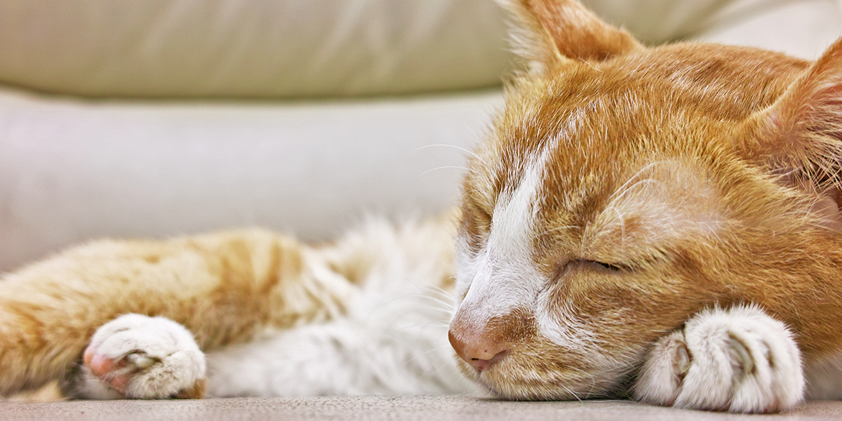 Symptoms of Kidney Disease in Cats