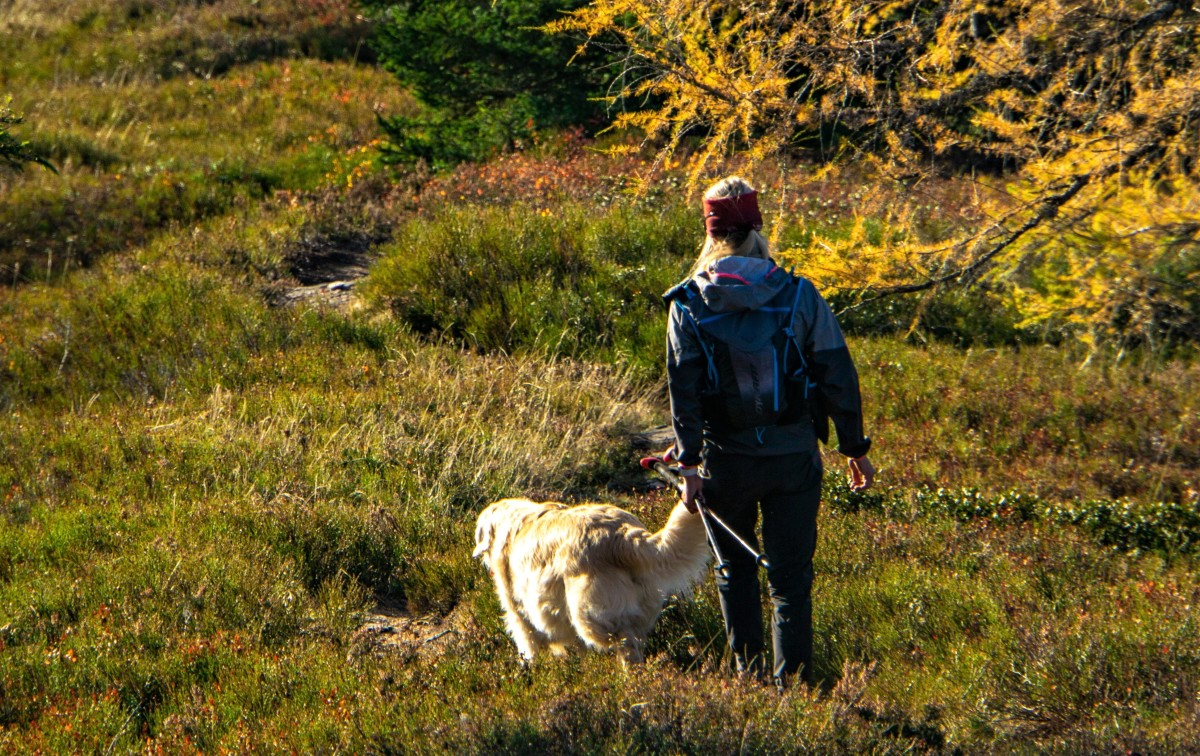 When you plan to go out on a stroll together, remember to carry with you enough treats or other types of rewards that the dog enjoys.