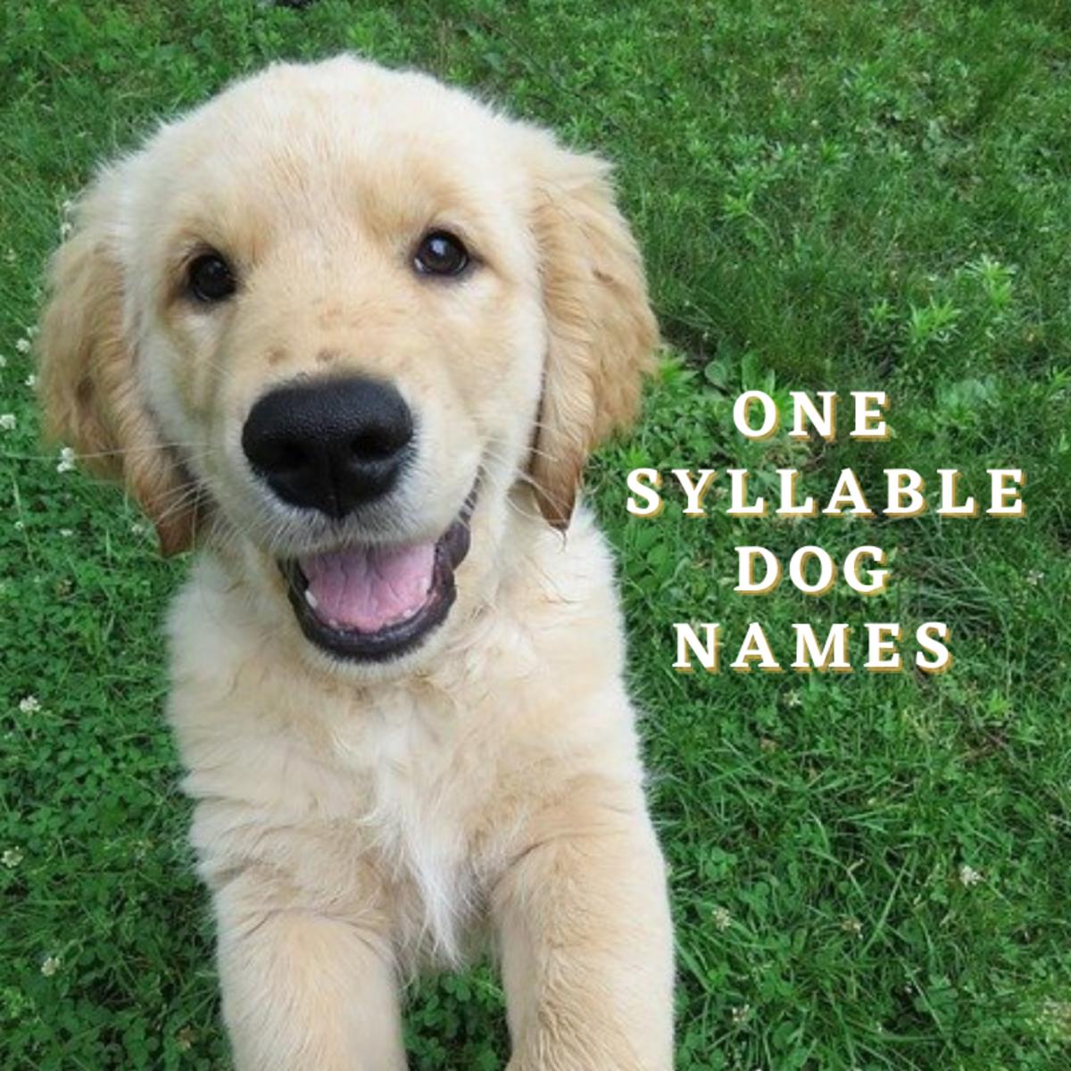 One Syllable Dog Names