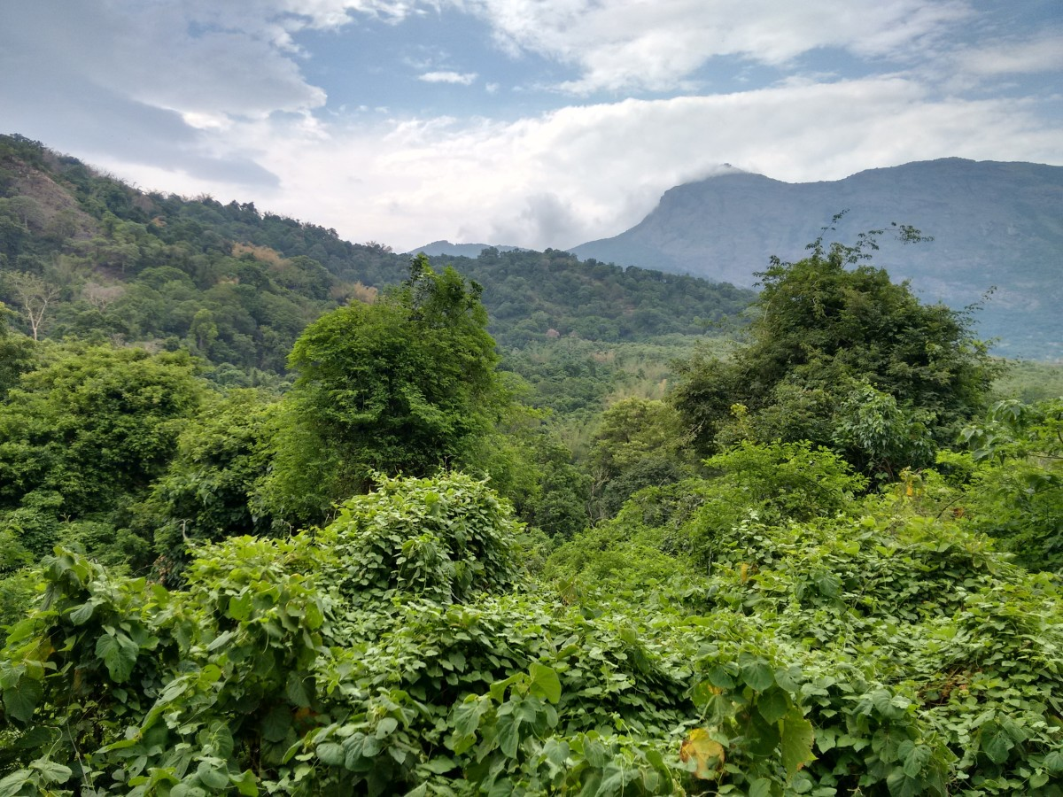 View of Western Ghats from Kovai Kutralam