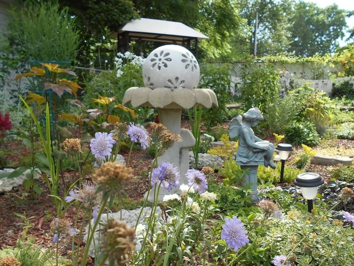 My reading fairy sitting in front of the birdbath and garden ball with purple pincushion fowers in the foreground