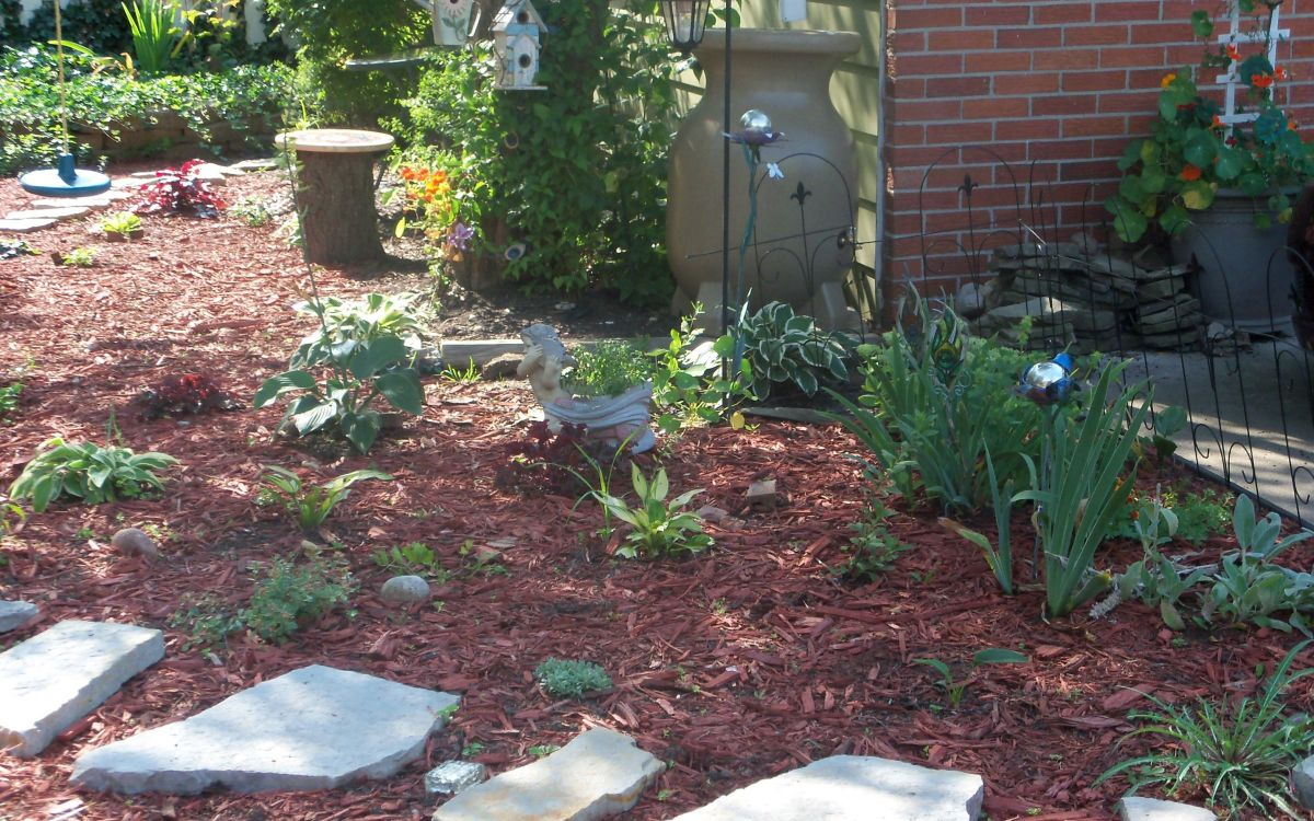 another view of the hosta garden