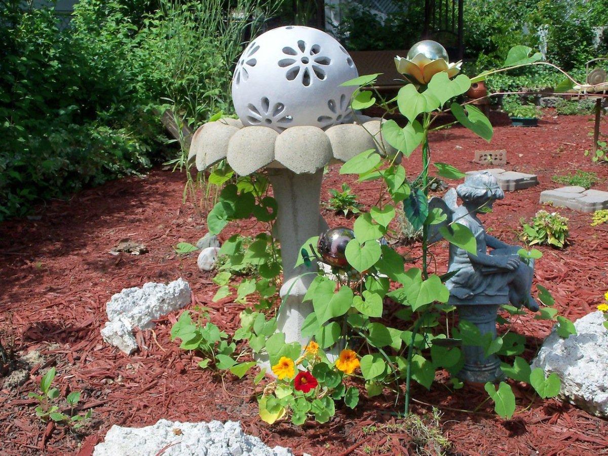 the vines love the birdbath
